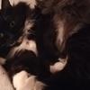 今更ながら被災地猫ローガンの心配