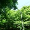 【八王子】初夏の高尾山