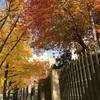 秋の韓国へ⑧