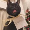 【トラリピ週次報告】【2019年11月18日週】不労所得:2,543円『クリスマスツリー』