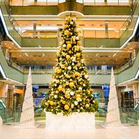 【金沢】王道の冬のお出かけスポット!クリスマスツリー・イルミネーションまとめ【最新版】