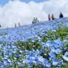 茨城小旅行(国営ひたち海浜公園・日鉱記念館・袋田の滝)
