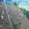 玉葱の植え込み!!