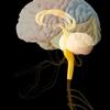 【水素セラピスト検定】ヘルスケア編 『神経系と脳の働き Part.4』