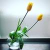 久しぶりに花を生けたらうれしくなった。花束を持って歩いているという事実がいいなと思った。