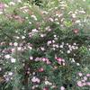 初夏の「まつこの庭」