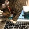 MacBookで遊ぶねこまると