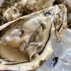 家で舌鼓を打つ日々、たとえば絶品の生牡蠣に魅せられて