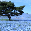 『色散歩 / 青の世界』ひたち海浜公園 ネモフィラの丘