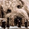 チェス初心者向け記事 「学習プラン:基本の先へ!」
