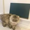 簡単過ぎるDIY ネコの水飲み台&黒板作り