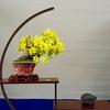 小品盆栽の飾り方