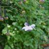 【私の秘密の花園】のレンゲが咲きました!
