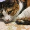 【動画あり】愛猫日記#2