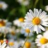 花粉症に対する東洋医学的アプローチと鍼灸治療について