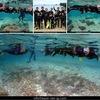 浮潜珊瑚的森林!