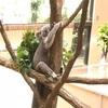 KOBE観光の日に無料で王子動物園に行ってきたよ