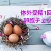 【不妊治療】はじめての体外受精・卵胞チェックと採卵前日までの流れ