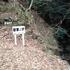 丹沢 新茅ノ沢を登る 2016年3月6日