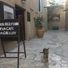 猫が超フレンドリー!ドバイの歴史地区、バスタキヤ地区へ!