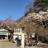 【奥高尾トレラン】高尾山〜陣馬山〜相模湖 山桜も見納め