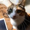 【愛猫日記】毎日アンヌさん#198