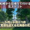 【札幌から日帰りで行ける花スポット12選】5月・6月・7月に見頃を迎える北海道の花