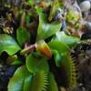 目覚め始めた植物たち2019