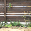 庭づくり本:花壇づくりのヒント
