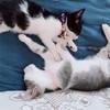 日曜はMONTA保護猫譲渡会