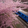 河津桜×みさきまぐろきっぷで三浦半島の絶景を巡る、日帰りモデルコース
