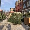 クリスマスツリーのモミの木がその辺で売られだした