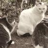 3月26日 雨の江東区を猫さま歩き とその情景