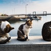 猫島で一泊二日、猫まみれでした。その3