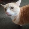 猫が熱いトタンの屋根にいるみたいだね!?
