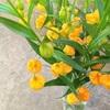 お花の定期便 4月号