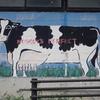 都市部でがんばる、たくましい酪農家を訪問