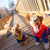 犬連れ必見!インスタ映え写真が撮れる蓼科湖・芸術の森公園