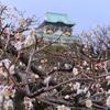 【大阪】一足早く春を感じる大阪城公園梅林 2021年の見頃の時期は?