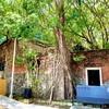 台湾生活日記(4) (2020年10月8日) ラピュタ好きにオススメ!台南の安平樹屋
