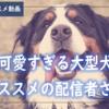 【YouTube】大型犬おすすめ動画配信者さん!【超個人的動画ベスト8】