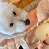 ☆生後31日目*母乳を飲む練習5☆