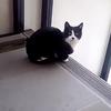 20日ぶりに白黒猫「ちびゴン」が登場!
