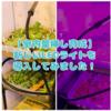 たにログ181 【室内】葉挿し育成に肥料を使うとどうなる?新しいLEDライトで多肉の葉挿し育成!