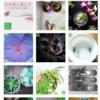Instagram投稿企画第二弾!『#お花と暮らす』