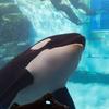 XQ2を片手に、子供と名古屋港水族館へ