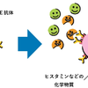 免疫と抗体と花粉症