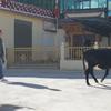 10/29(火)雲南へのさよならと中国語の目標達成