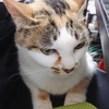 「今日は猫の日」だけど私にとっては〇〇~ブログ毎日投稿も3年目に入ってます^^~