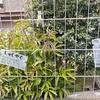おうち植物園を作る